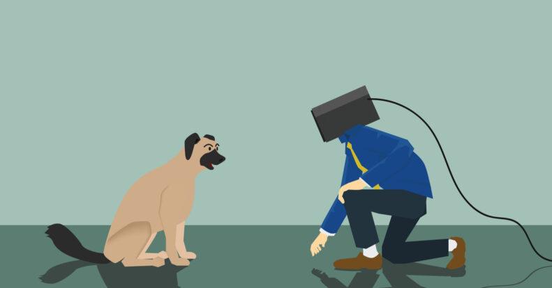 Video surveillance for pets. TOP 5 advantages